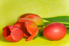 Red Easter egg and tulip Royalty Free Stock Photo