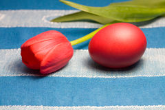 Red Easter egg and tulip Royalty Free Stock Image