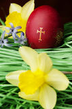 Red Easter egg and yellow flowers Royalty Free Stock Photos