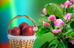 Red Easter eggs in a basket and flowers of Apple trees. Royalty Free Stock Image