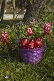 Red Easter eggs. A Basket of Easter eggs on a sunny day in the park Stock Image