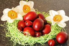 Red easter eggs with flowers. Stock Photos