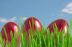 Red easter eggs in green grass Royalty Free Stock Photos