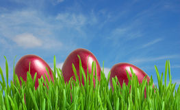 Red easter eggs in green grass under blue sky Royalty Free Stock Photos