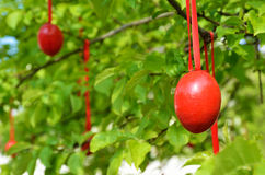 Red Easter eggs in the spring garden Royalty Free Stock Image