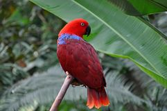 Red eclectic parrot stock image