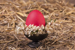 Red egg with cherry blossom on dish Royalty Free Stock Image