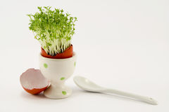 The red egg with growing cress Royalty Free Stock Photo