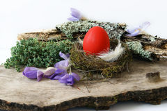 Red egg in nest and crocus Stock Image