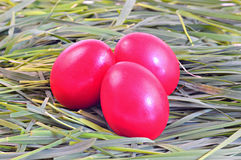 Red eggs on green grass; Easter tradition. Three red eggs on green grass; Easter tradition Royalty Free Stock Photography
