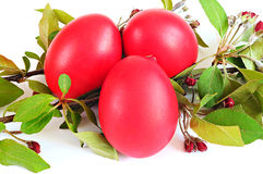 Red eggs, spring twig with leaves and flowers; Easter concept Stock Photo