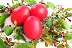 Red eggs, spring twig with leaves and flowers; Easter concept. White background Royalty Free Stock Image