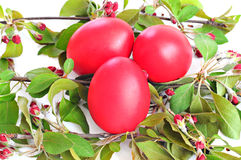 Red eggs, spring twig with leaves and flowers; Easter concept. White background Royalty Free Stock Images