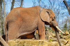 Red elephant in the park. Of Amnéville in the Meuse in France royalty free stock image