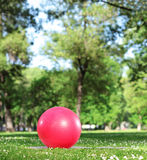 Red exercise ball on a green grass in a park Royalty Free Stock Images