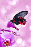 Red exotic butterfly Stock Image