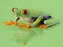 Red-eye frog Agalychnis callidryas. ON GREEN B/G Royalty Free Stock Photos