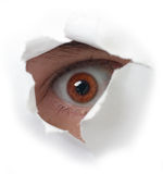 Red eye and paper Royalty Free Stock Images