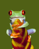 Red Eye Tree Frog 3 Stock Photo