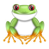 Red-Eyed Green Tree Frog Agalychnis Costa Rica Royalty Free Stock Photos