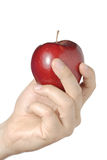 red för äpplehandholding royaltyfri fotografi