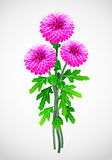 red för bukettchrysanthemumblomma royaltyfri illustrationer