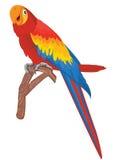 red för fågelillustrationpapegoja Arkivbild
