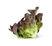 red för leafgrönsallatoak Royaltyfri Foto