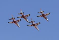red för lufttjurrace Royaltyfri Foto