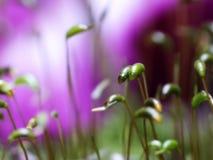 red för moss för bakgrundshaircaplampa Arkivfoton