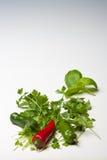 red för parsley för basilikachilir grön Arkivbild
