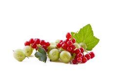 red för vinbärkrusbärgreen Royaltyfria Foton