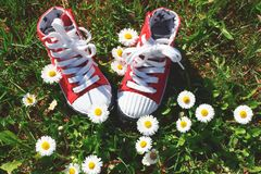 Red fabric kid sneakers on green meadow stock image