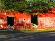 Red facade of a house ruins with trees inside in Yucatan, Mexico Stock Images