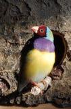 Red face bird stock photos