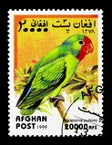 Red-faced Lovebird (Agapornis pullarius), Parrots serie, circa 1. MOSCOW, RUSSIA - DECEMBER 21, 2017: A stamp printed in Afghanistan shows Red-faced Lovebird ( Stock Photography