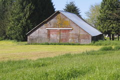 A red-Faded Barn on a Yellow Field. An old, red-faded barn is craddled in a yellow field stock photos