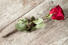 Red faded rose. On old wooden background royalty free stock photo