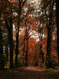 Red fall. Fall in a park royalty free stock photography