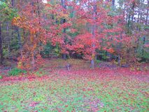 Red fall foliage in South, USA Royalty Free Stock Images