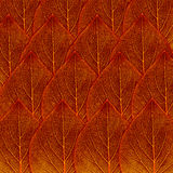Red fall leaf background Royalty Free Stock Photography