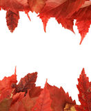 Red fall leaf border Royalty Free Stock Image