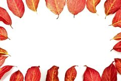 Red fall leaves Royalty Free Stock Image