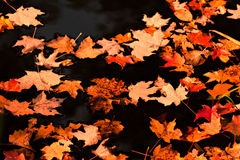 Leaves on water pond Royalty Free Stock Images