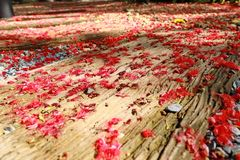Red fall pollen scattered on the gravel and stone blocks. Selective focus. Pollen red fall spread on the area is gravel and floor stone blocks. Selective focus royalty free stock photo