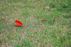 Red fall. The pure grass with fallen leaves can serve as a good background Royalty Free Stock Photography