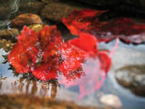 Red Fall Reflections Royalty Free Stock Photos