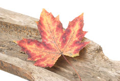 Red fallen leaf. On wooden logs Stock Photo
