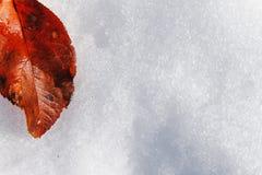 Red fallen leaf Stock Photos