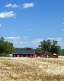 Red Farm Buildings. A red barn and farmhouse sit amid golden fields of wheat and grass Stock Photo